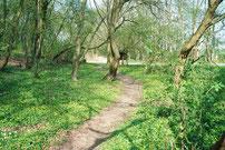 Ausbau unseres Waldlehrpfades  (2011)