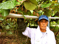 Yasuhiro Kawami at the kiwi orchard