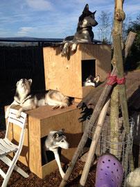 Wir in unseren Etagen-Wohnungen, Zwärg, Borea, Amarok und Eagle (von unten nach oben)