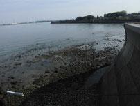 松江漁港 内波止・右側の写真
