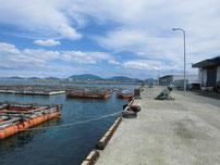 南風泊港 港内・筏の写真