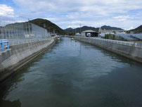 永田川の写真
