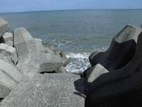 椎田干拓地海岸 階段の写真