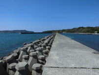 大井漁港 大波止の写真