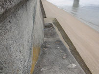 佐波川河口 下へ降りる階段 の写真