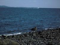 大積海岸 の写真2
