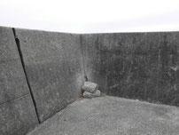 向島運動公園 波返しの写真
