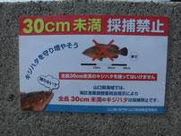 キジハタ 30cm未満採捕禁止看板の写真