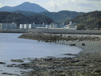 白野江の波止の写真