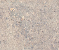 Burenbruch Muschelkalk  grau