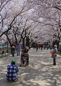 写ッセ さくら部門賞 No.40273 桜のトンネルを楽しむ人々 太田 誠二(新潟市)