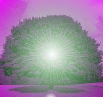 https://image.jimcdn.com/app/cms/image/transf/dimension=202x1024:format=jpg/path/sadee7a5c58ef7c36/image/iae5a1d0d9bcb4e5d/version/1507364197/image.jpg