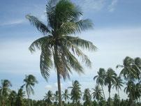 und millionen Palmen