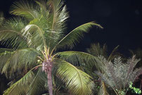 Palmen im Blitzlicht