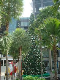 O Tannenbaum zwischen Palmen