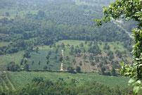 Der Blick vom Gipfel auf Kokospalmen
