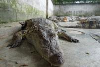 und der Krokodilfarm.Viel mehr noch auf der Sonderseite