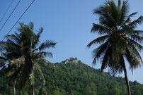 und von den Palmen noch mal hinauf
