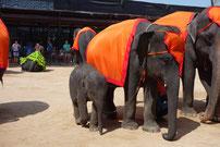 viele Elefanten sind zu sehen