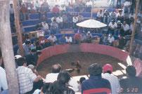 """Coliseo de Gallos """"El Monumental"""" Arequipa"""