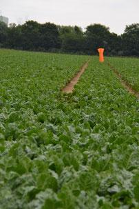 Markierung, Landwirtschaft, Feld, Feldarbeit