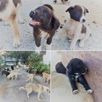 Die vergessenen Hunde von Mavropigi. Quelle Leben für Pfoten