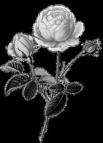 Auf unserem Hof im Allgäu stellen wir seit 21 Jahren Blütenessenzen selber her. Viele Blüten kommen von Pflanzen, Sträuchern und Bäumen, welche wir bei uns in Gärten und Biotopen angesiedelt haben. Ein spezielles Augenmerk liegt auf den Rosen