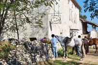 Accueil des cheveaux et des ânes