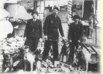 Deutsche Schäferhunde als Trümmersuchhunde im 2.Weltkrieg in England