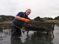 retournement des poches d'huîtres sur les parcs ostréicoles