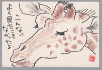 キリン 横顔