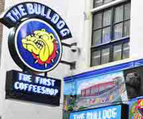 Coffee Shop The Bulldog Amsterdam