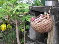 Corbeille en feuilles de cocotier