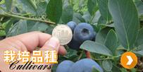 栽培品種 cultivars