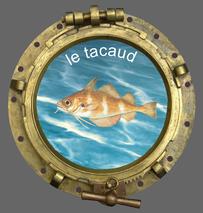 Le club de pêche en mer SMPP 66470 dans le 66 aime bien faire connaitre ce poisson le tacaud.