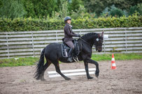 Uwe Working Equitation Ostfriesland