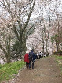 2013年4月 吉野山