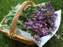 Auch Salbei-Blüten sind - wenn auch etwas anders in ihrer Wirkung als die Blätter - eine bewährte Medizin in der Erkältungszeit
