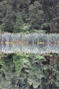 Neuseeland Lake Matheason © Foto Elke Paland