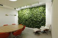jardín vertical interior plantado con epipremnum.  Buen ejemplo de como plantas en el interior purifican aire y mejoran la calidad de vida dentro de un espacio.