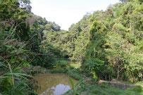 A small forest edge near Ban Namly, Oudomxai province, Laos