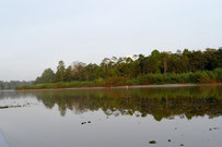 Kinabatangan River, Borneo, Sabah, Malaysia