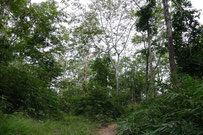Forest in Phu Pan, Sakon Nakhon province Thailand