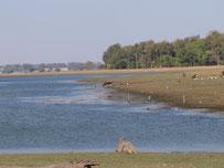 Wildlife sanctuary near Kalasin, eastern Thailand