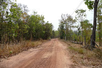 Dry dipterocarp forest in Phu Pan, Sakon Nakhon province, eastern Thailand