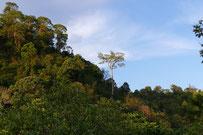 Doi Mussoe, Tak province Thailand