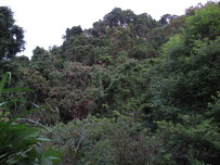 Forest edge at Doi Angkhang..Chiang Mai province..northern Thailand