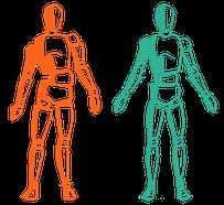 Körperteile kommen dank Faszien Therapie wieder ins Lot