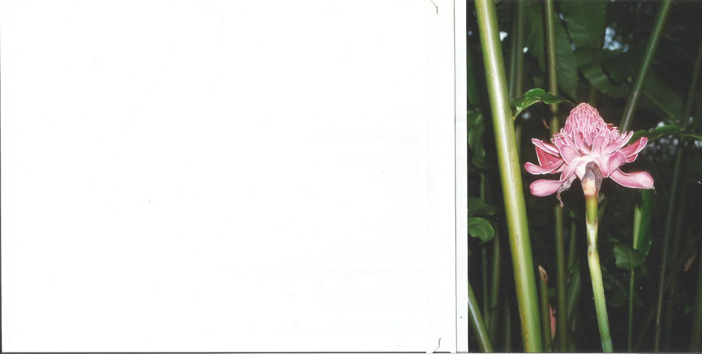 fleur  de l'ile