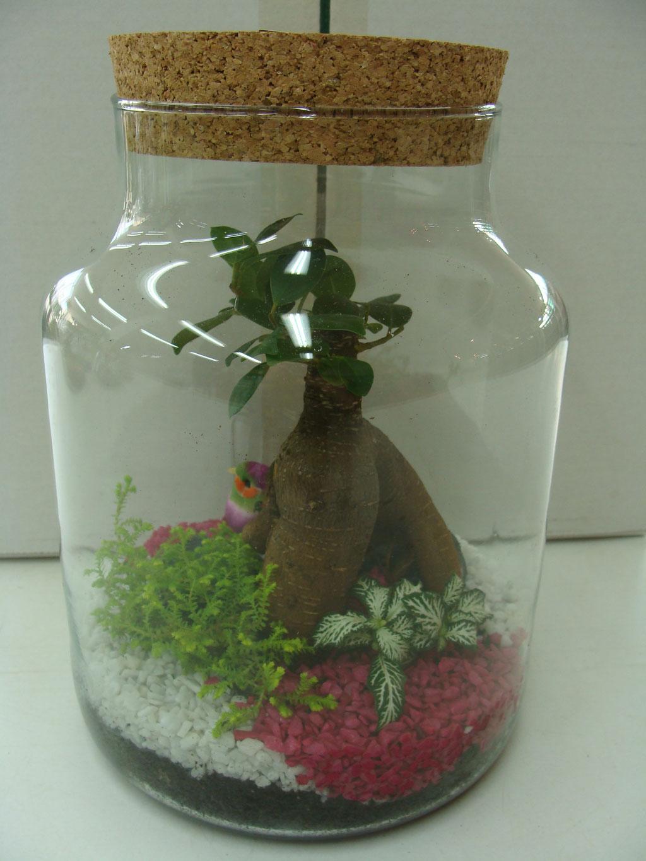 Terrarium de plantes avec bouchon en liège